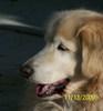 Sunnydog Webb