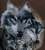 ♠Lonewolf♠
