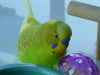 Olliebird