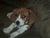 webbydog