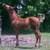 Q4horse