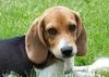 Newshound41