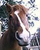 Ponyhome