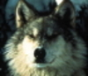 akwolffan