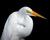 whiteheron