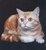 catlady1