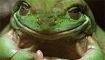 Froggman tg