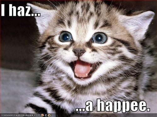 Kitten has a happy
