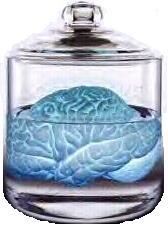 Allen s brain  blue