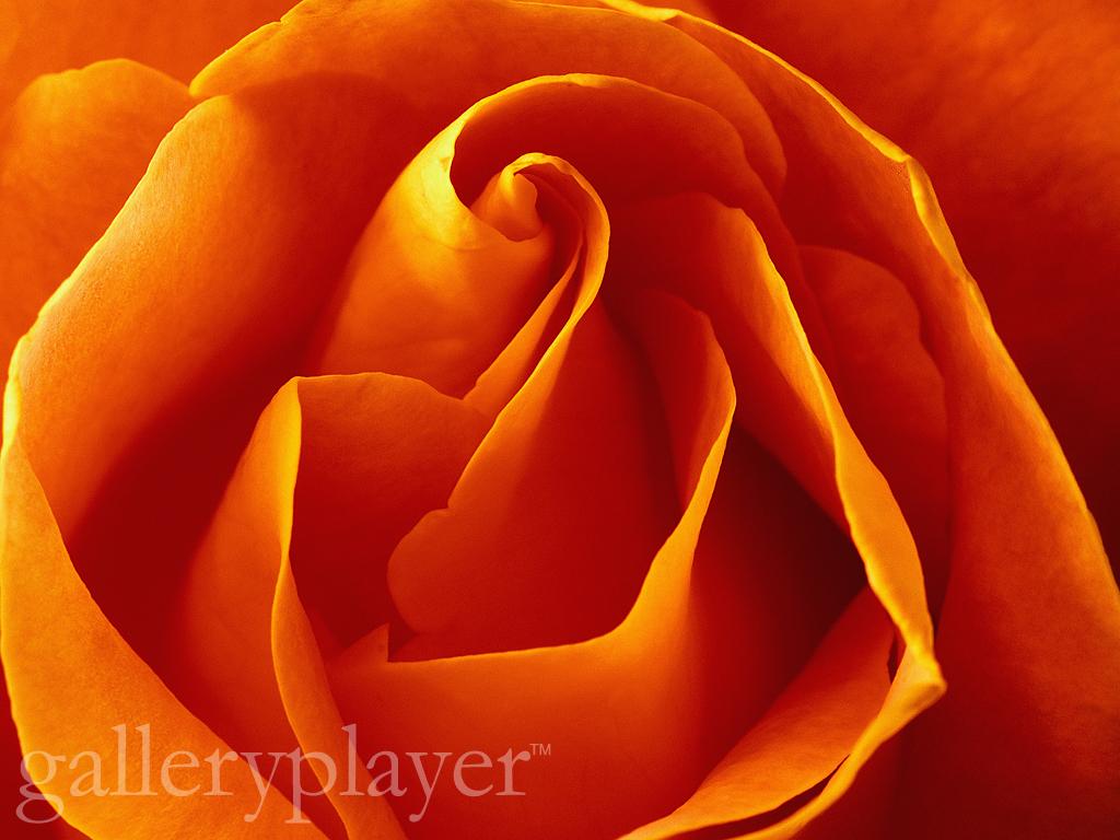 Flower   galleryplayer