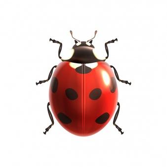 Ladybird design 1284 1149