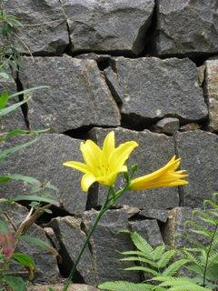Yelloflower