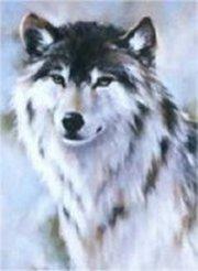 21509wolf p