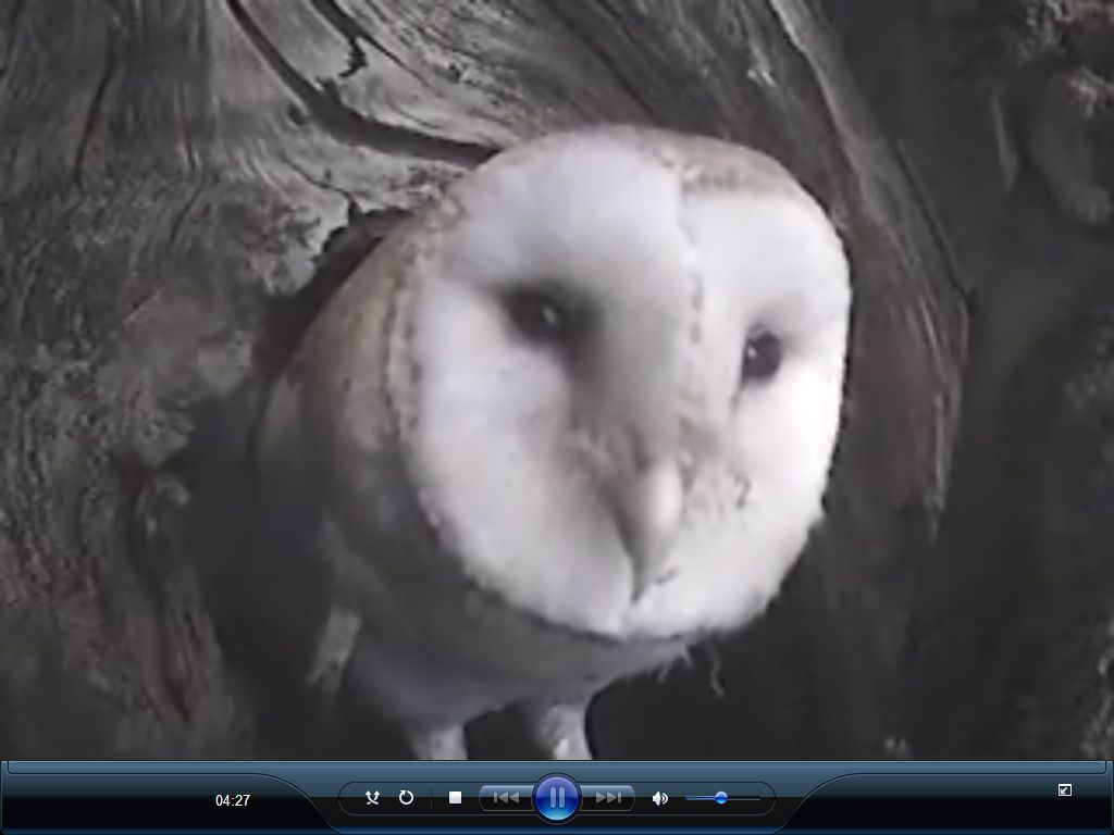 Owls 96