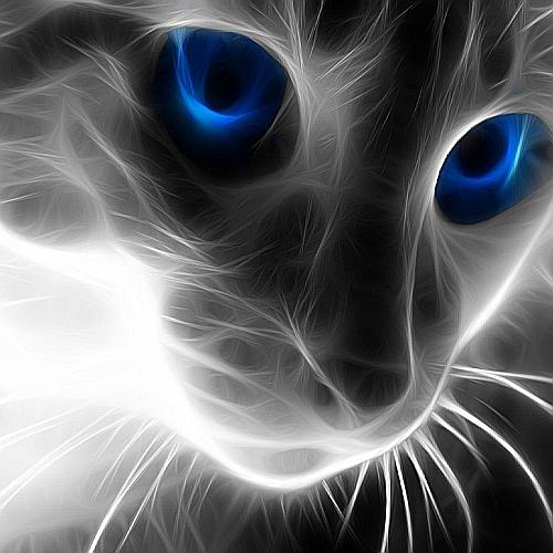 Desktopcat