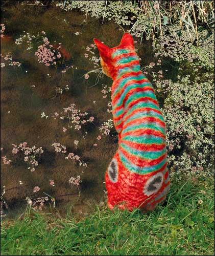 Catfish08