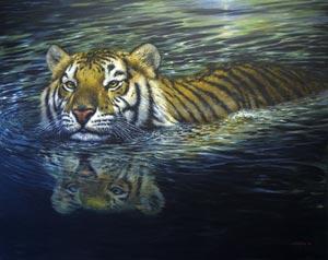 Tiger swimming300