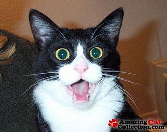 Crazycat