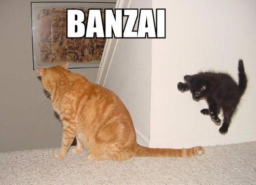 Banzai cat