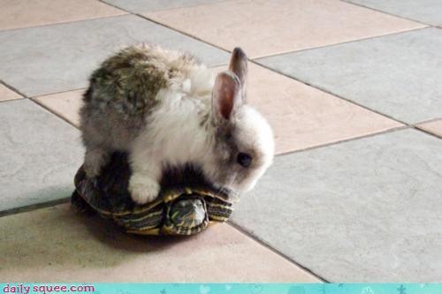Bunny rides