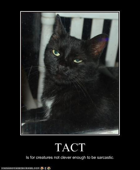 Cat defines tact