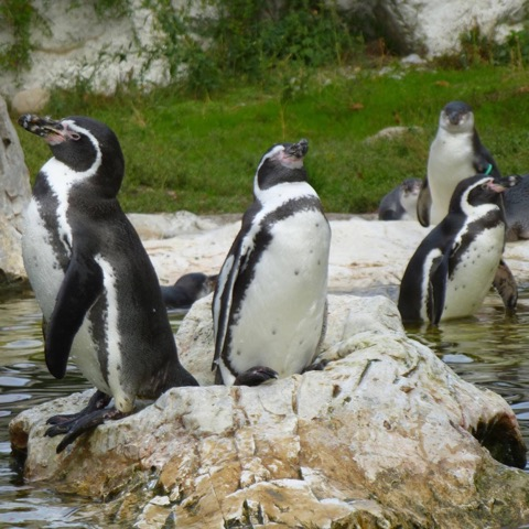 Fb profile penguins