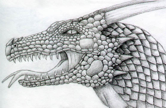 Penciled dragon