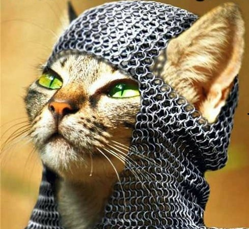 Conquer kitty