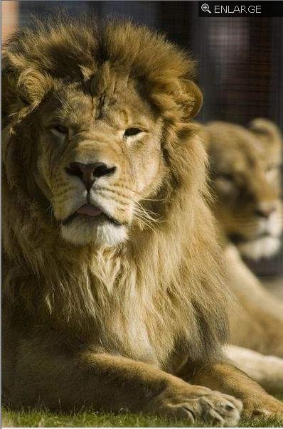 Leo and una  2
