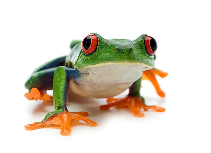 Frog 17