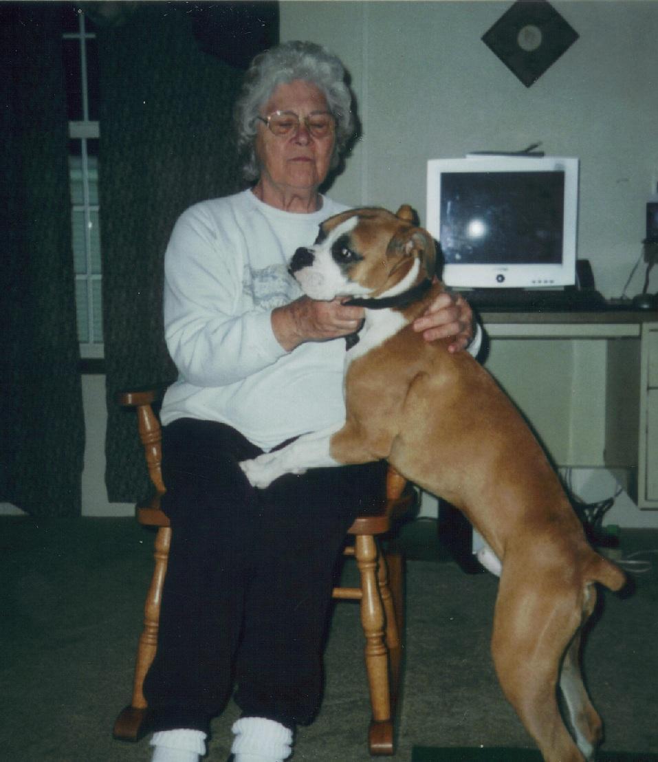 Boxer granny dog 23725947106