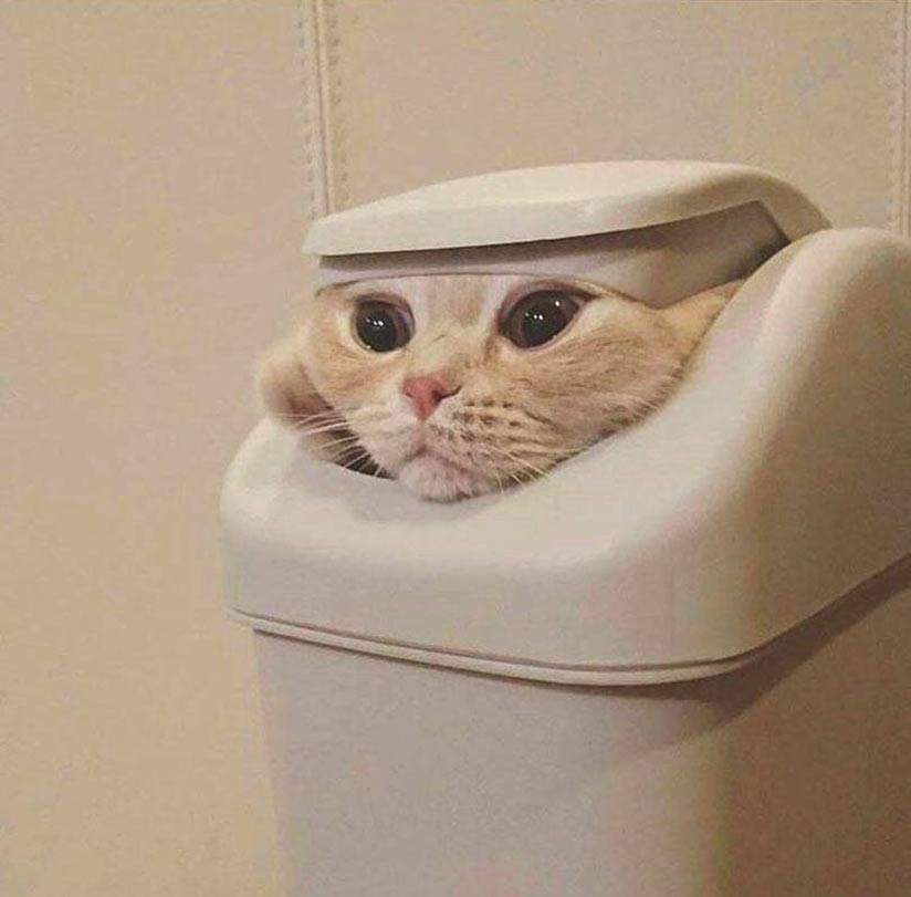 Cat spy