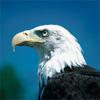 Rm eagle