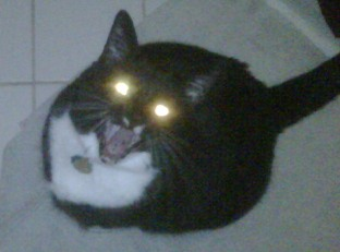 Demon kitteh wants muffins