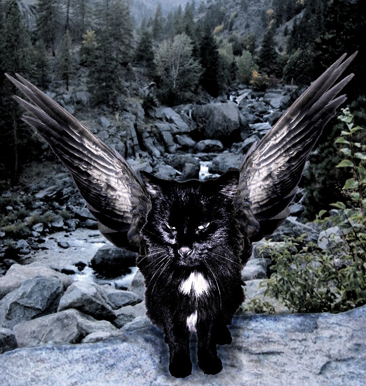 Brokenwing winged cat warriors cats erin hunter clans