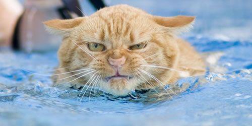 Toughcat
