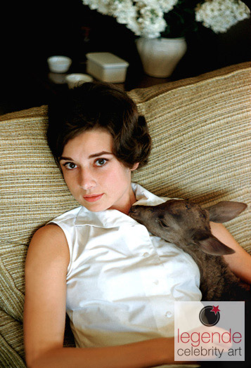 Audrey hepburn deer snuggle  12114 std