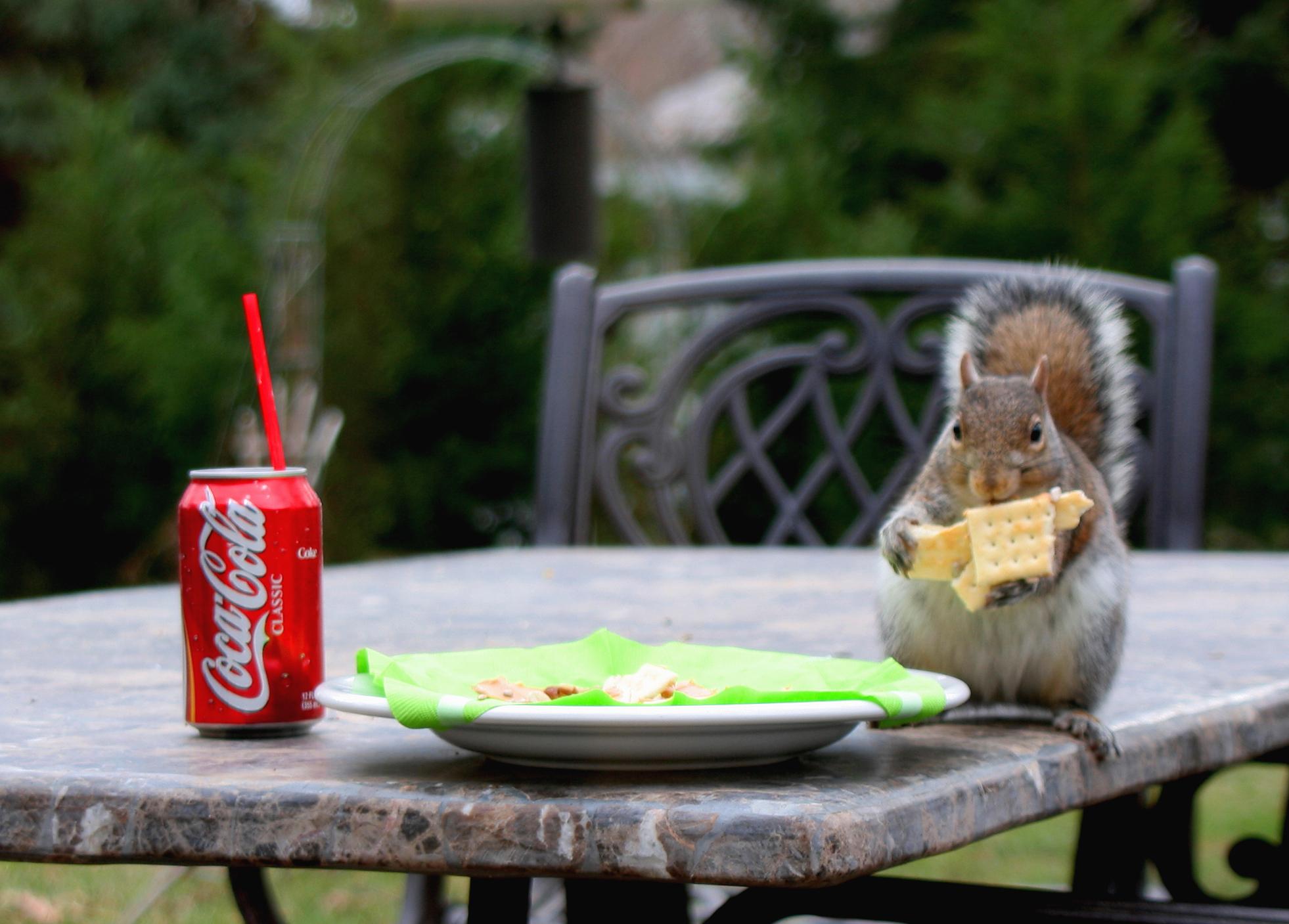 Coke squirrel 5x7 thanks