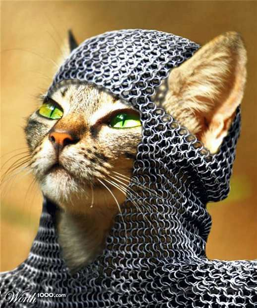 Cat in chain mail large   3