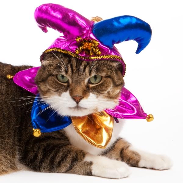 Jester cat