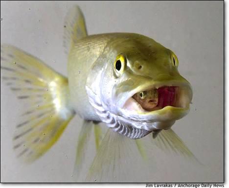 Fish n f
