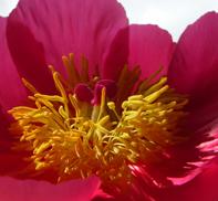 Blomst 1 twit