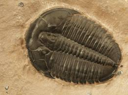 Trilobyte photo