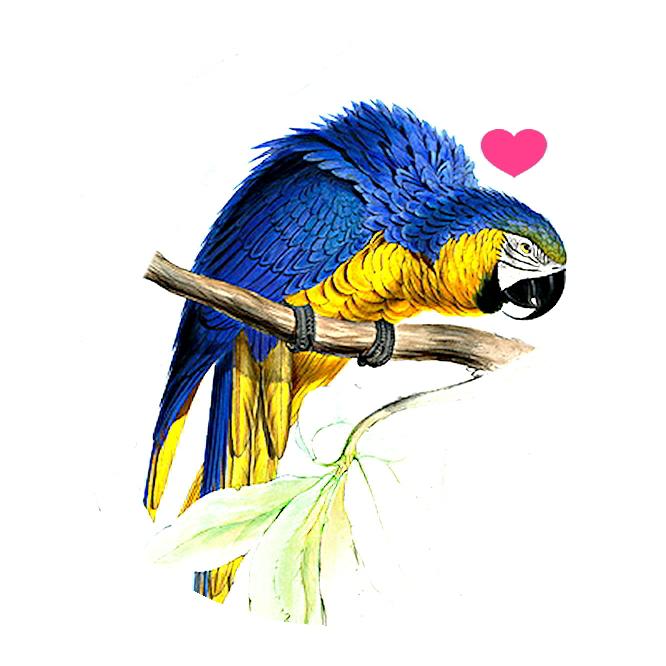 Badge parrot