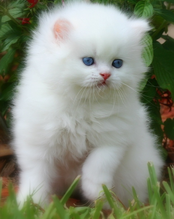 Fluffy kitty