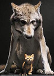 Wolf kitten2