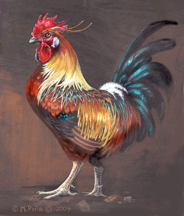 Rooster with horns