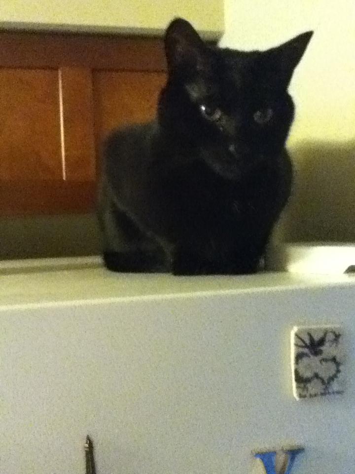 Luna on the frig