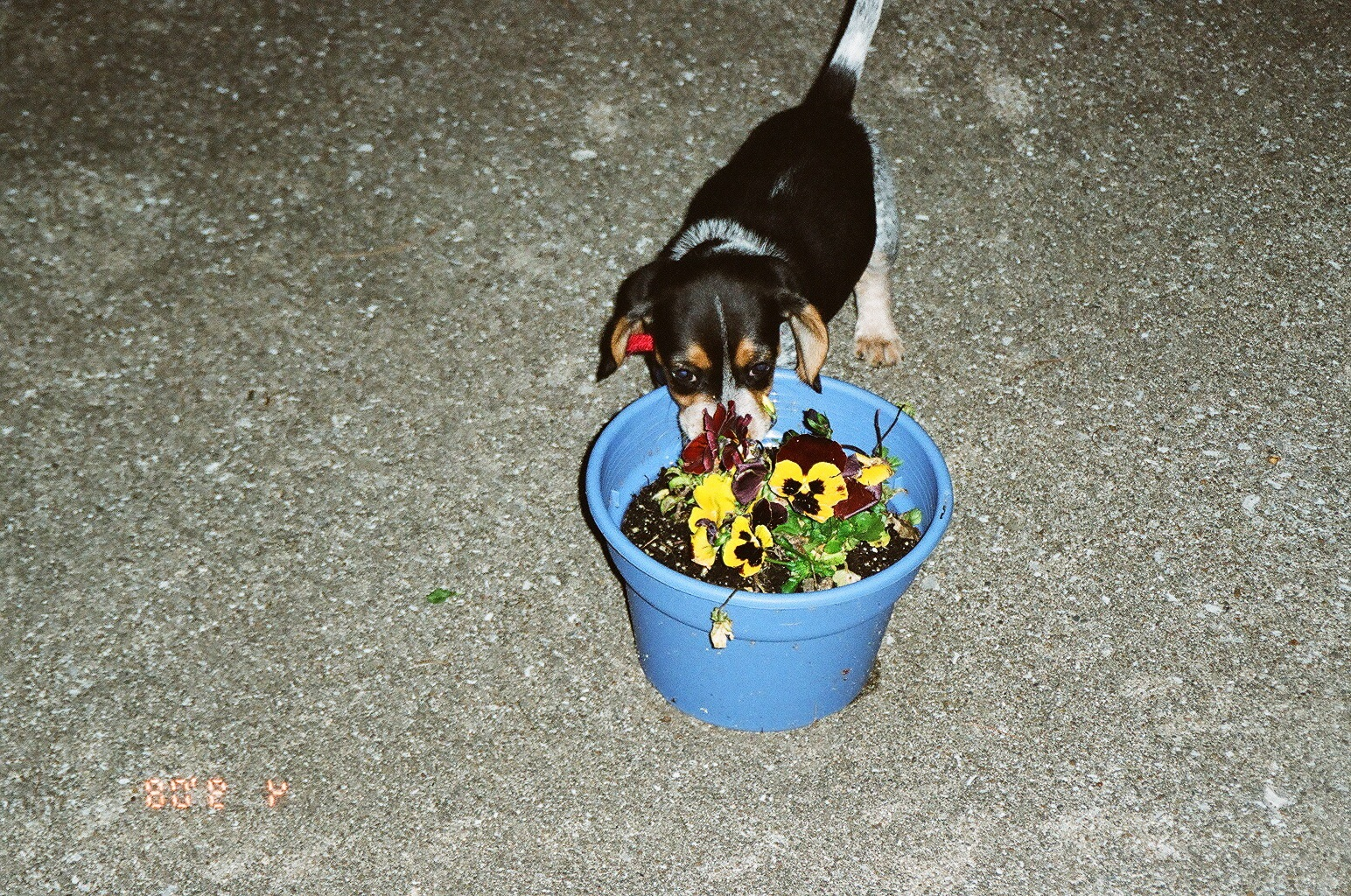 Jim and flowers
