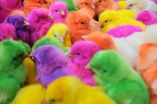 New years chicks